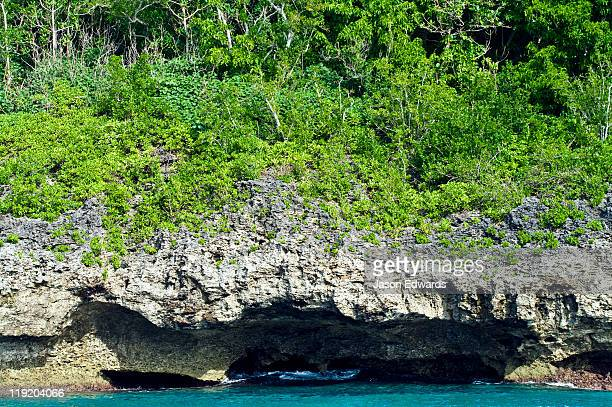 Lush forest colonising a limestone cliff on a tropical island.