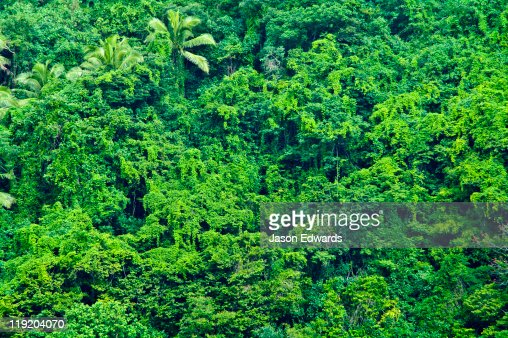 Dense, tangled tropical rainforest shrouds the surface of an island.