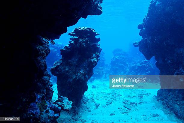 A pillar of coral in an underwater canyon in a tropical coral reef.