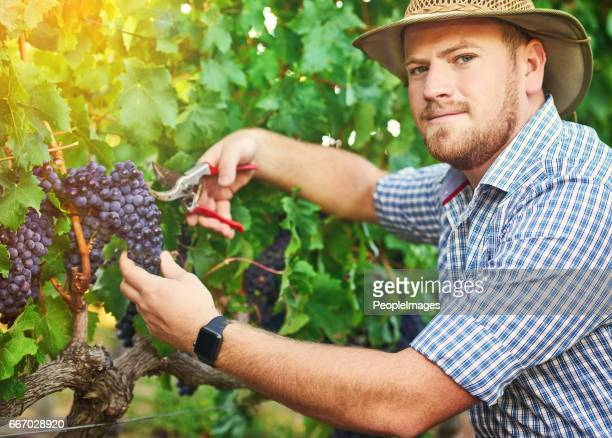 I've been producing quality grapes since forever