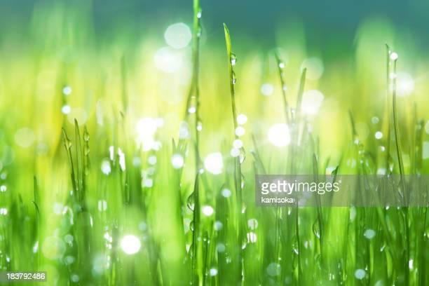 Gras mit Regen-Tropfen-Hintergrund