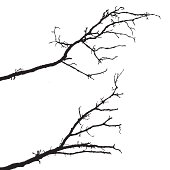 vector silhouette of the branch tree on white background