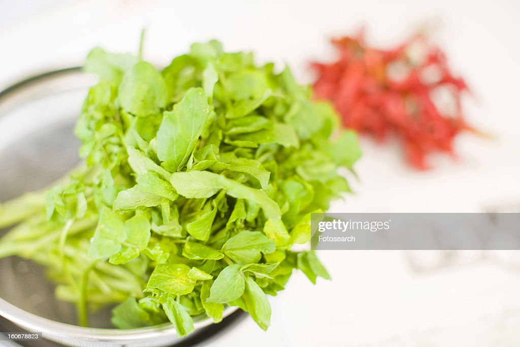 Vegetable and chili pepper : Stock Photo