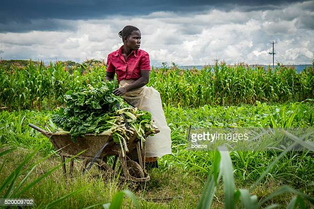 Fermier de légumes