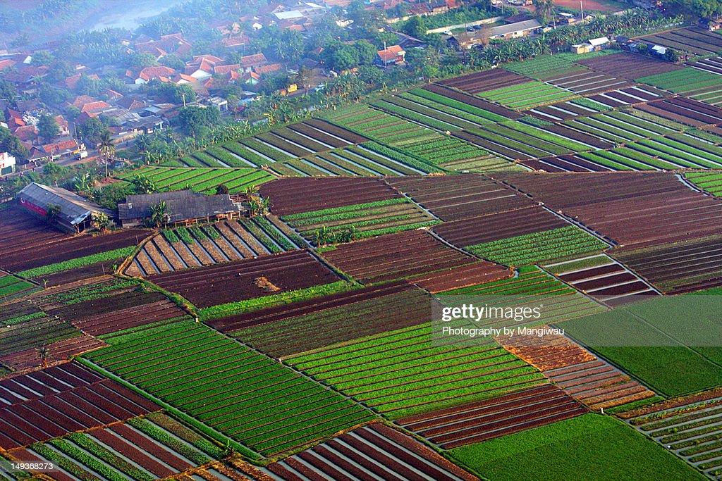 Vegetable farming : Stock Photo