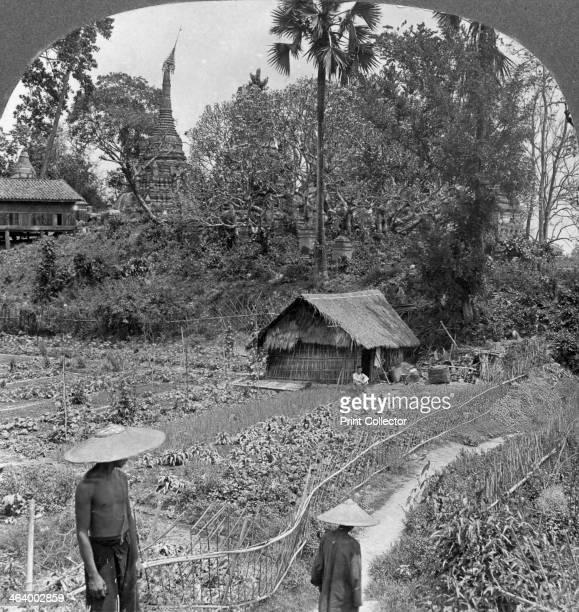A vegetable garden amidst pagodas Bhamo Burma 1908 Stereoscopic card Detail