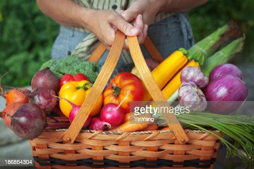 Vegetable Garden Basket of Fresh Food Harvest from Organic Gardening