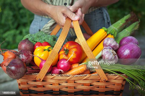 Jardín de vegetales frescos de la cesta de alimentos orgánicos cosecha de jardinería