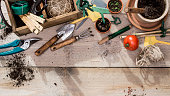 Top view vegetable gardening header image on old stained wooden planks with text space