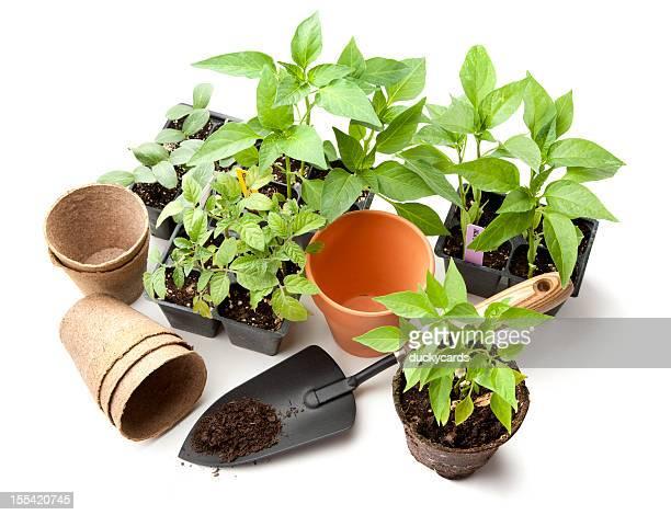 Légumes articles jardin