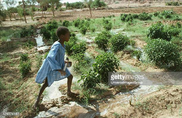 Vegetable Gardening Niger Tahoua Village Irrigating Crops Food production in the Sahel is critically dependent on seasonal rains which in recent...