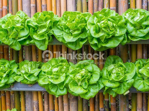 Vegetable In Decorated Wall Vertical Garden Idea Stock Photo ...