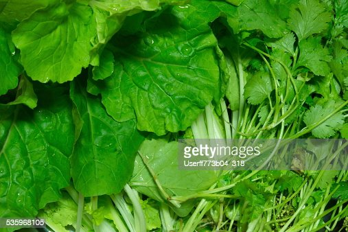vegetable : Stock Photo