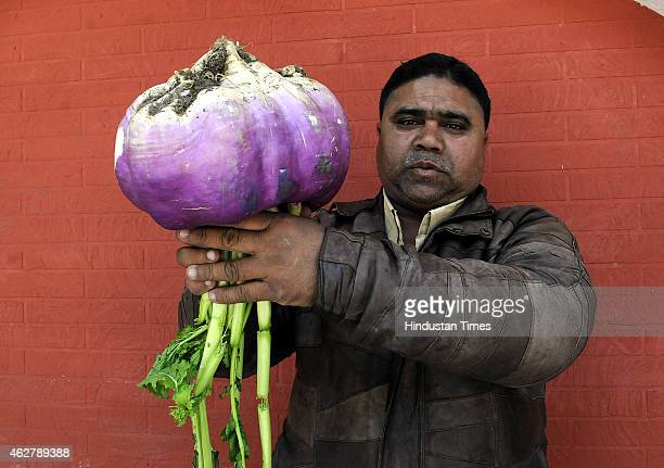 A vegetable seller shows a turnip of 25 Kg which he purchased from a farmer near Deria Sahu village in Dewas district on February 5 2015 in Indore...