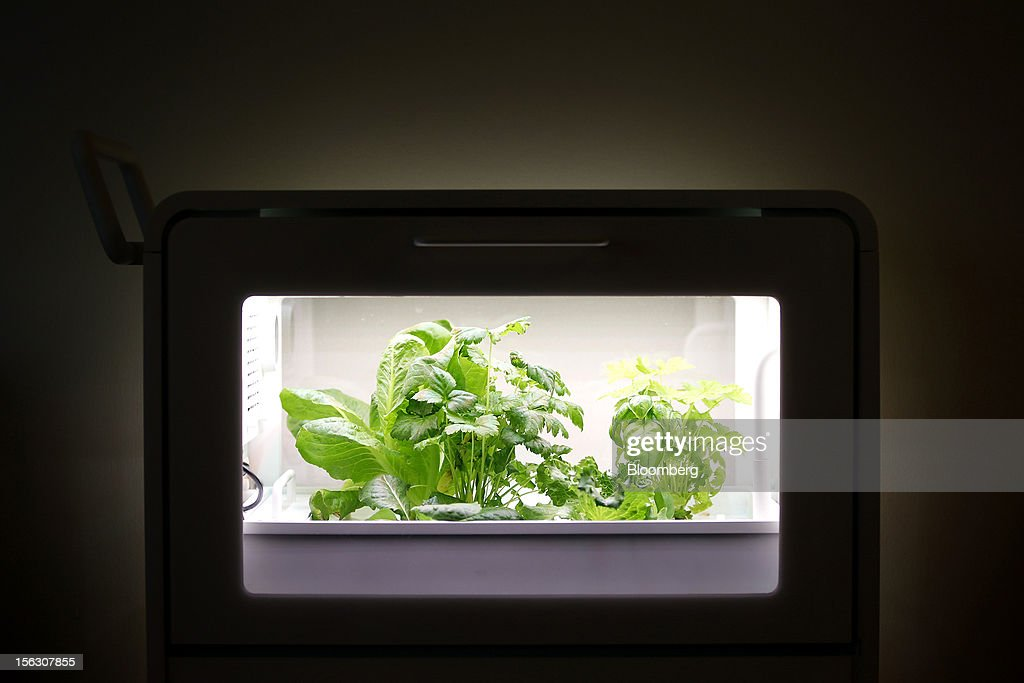 Vegetables and herbs grow inside a prototype of a home-use mini 'plant factory' manufactured by Panasonic Corp. at a house in Kashiwa City, Chiba Prefecture, Japan, on Monday, Nov. 12, 2012. Japanese consumers are closing their wallets as the economy's outlook darkens, making it harder for Prime Minister Yoshihiko Noda to stave off the nation's third recession in four years. Photographer: Kiyoshi Ota/Bloomberg via Getty Images