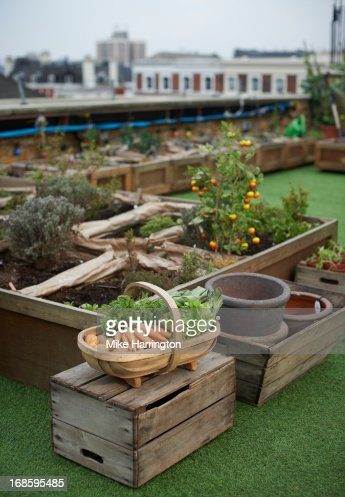 Vegetables in a basket in urban roof garden.