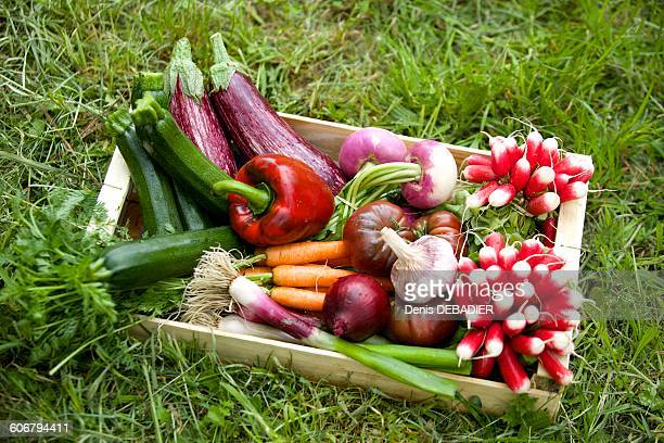 Vegetables in a field box
