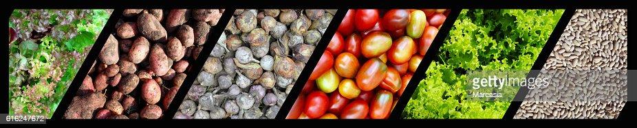 vegetables : Stock Photo