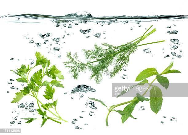 Gemüse Unterwasser