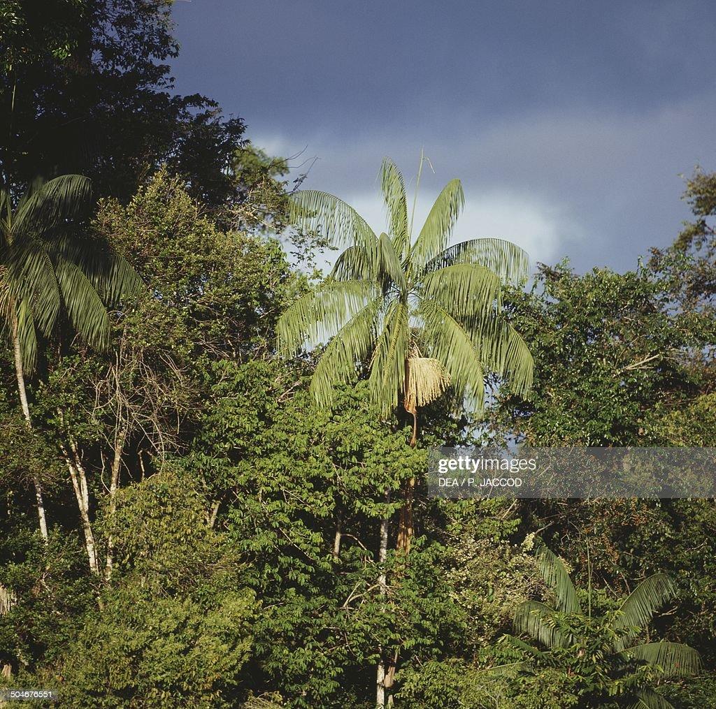 Vegetation along the Cano Mosquito stream, Amazon rainforest, Amazonas, Venezuela.