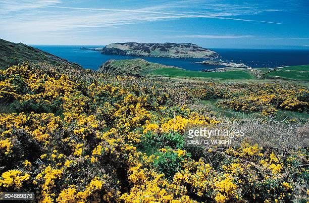 Vegetation along the coastline Isle of Man British Crown Dependency United Kingdom