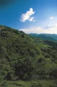 Vegetation between Ruhengeri and Kigali Rwanda