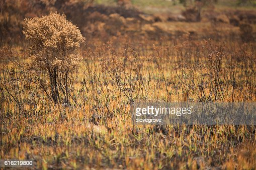 Vegetation damaged by bushfire : Foto stock
