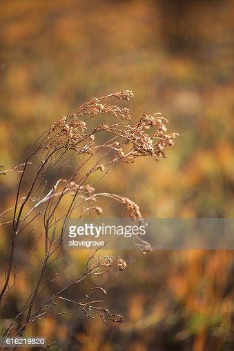 Vegetation damaged by bushfire : Stock-Foto