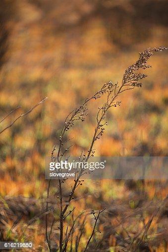 Vegetation damaged by bushfire : Stock Photo