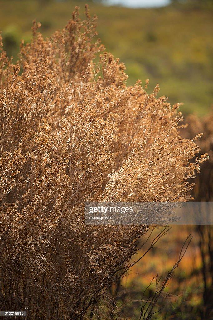 Vegetation damaged by bushfire : ストックフォト