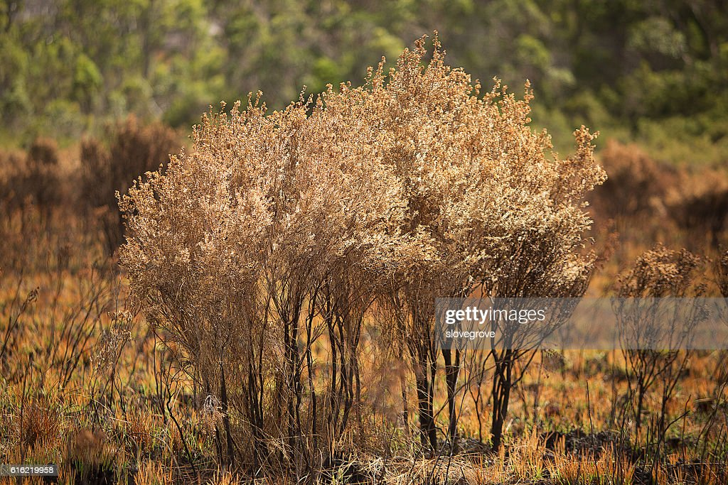 Vegetation damaged by bushfire : Stock Photo