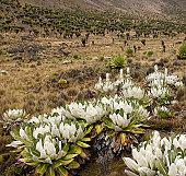 Vegetation on slopes of Mt Kenya.