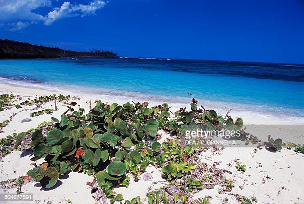 Vegetation on the beach Jamaica