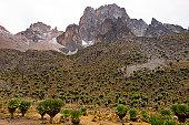 Vegetation on walk to the top of Mt Kenya.