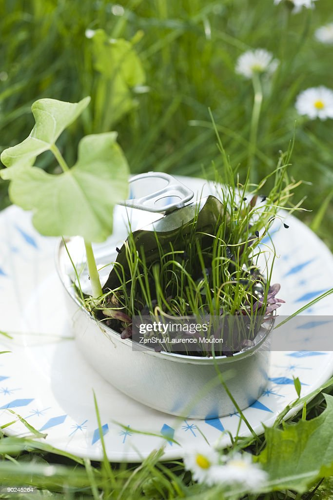 Vegetation sprouting out of half-open sardine can : Stock Photo