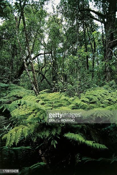 Vegetation Tsitsikamma National Park South Africa