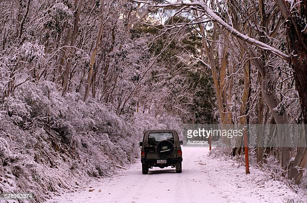 4WD vehicle on snowcovered road through forest Brindabella Road Namadgi National Park Australian Capital Territory