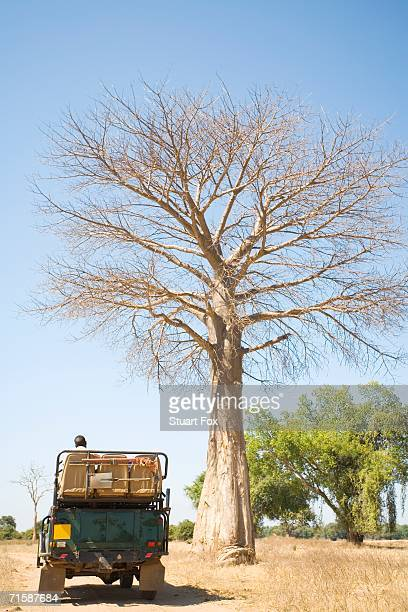 4X4 Vehicle Parked Under a Young Baobab Tree
