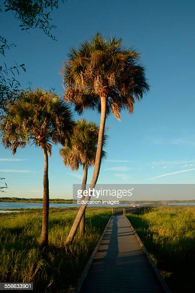 Vehicle traveling along a road with overhanging trees in Myakka State Park in Sarasota Florida