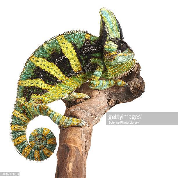 an in depth look at the chameleon Are you a skilled social actor or a social chameleon i look to the behavior of others public appearances/private realities in the 1980s that discusses self.