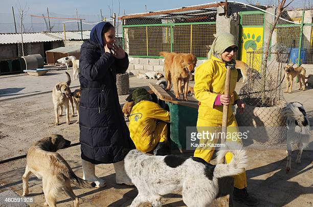 Veiled female volunteers busy cleaning the courtyard in Vafa shelter where homeless dogs are kept and cared for on December 12 2014 in Hashtgerd Iran...