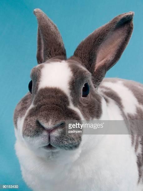 Velveteen Bunny Nahaufnahme