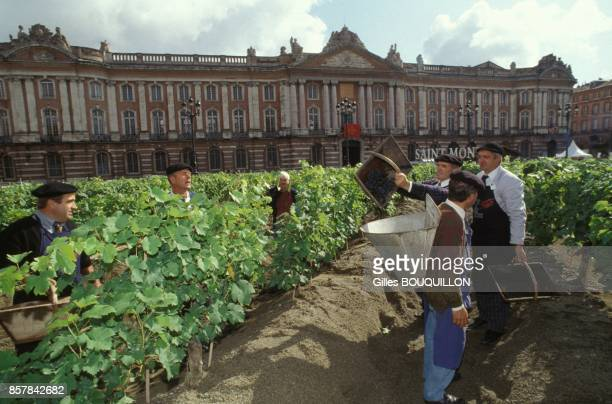Vendanges sur la place du Capitole de Toulouse en septembre 1993 a Toulouse France