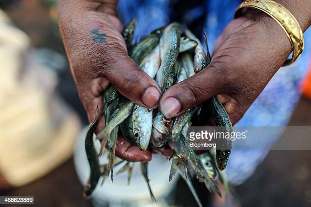 A vendor holds a handful of small fish for a photograph at the Margoa wholesale fish market in Margoa Goa India on Saturday Feb 8 2014 India's...