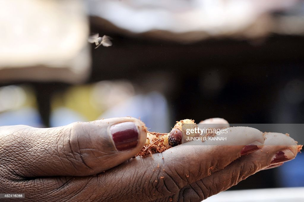 A vendor holds big weevil larvae on July 9 2014 at Kinshasa's Gambela market At Gambela market people can find insects for all tastes big weevil...