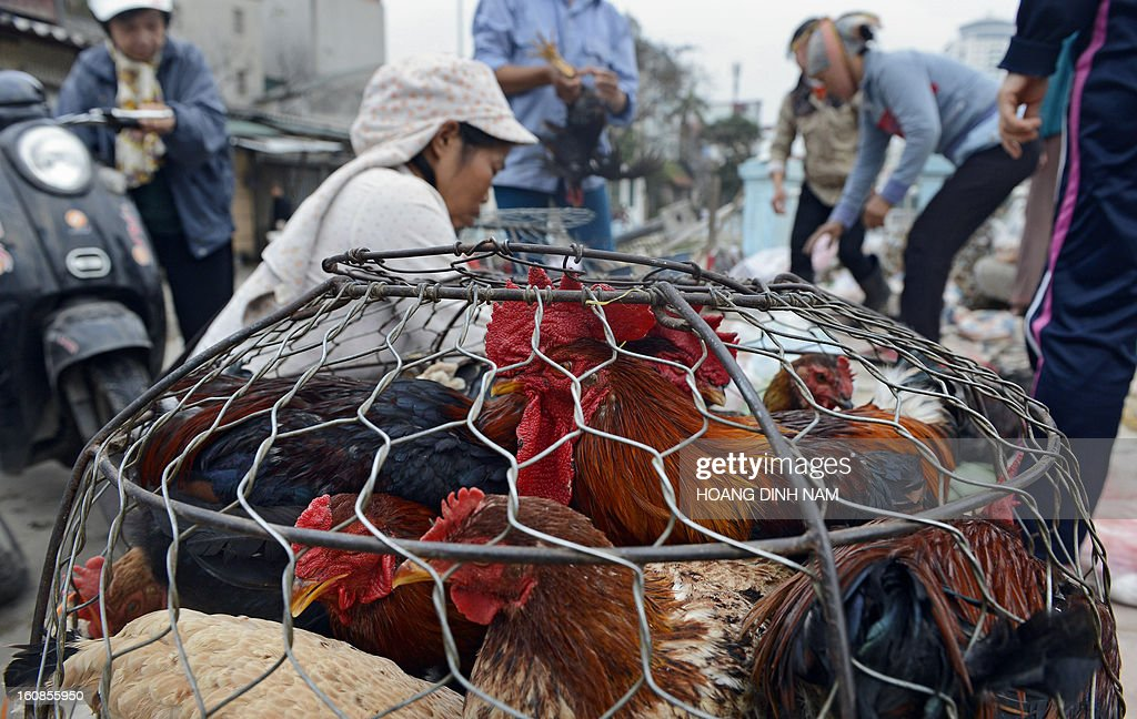A vendor offers chickens for sale to customers as Vietnamese do last-minute shopping ahead of the Lunar New Year, known in Vietnam as 'Tet', in downtown Hanoi on February 7, 2013