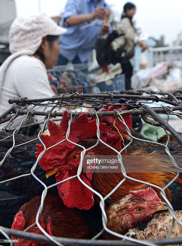 A vendor (back L) offers chickens for sale to customers as Vietnamese do last-minute shopping ahead of the Lunar New Year, known in Vietnam as 'Tet', in downtown Hanoi on February 7, 2013. Vietnamese will have a nine-day long Tet holiday this year, the longest ever decided by the Vietnamese government. AFP PHOTO / HOANG DINH Nam