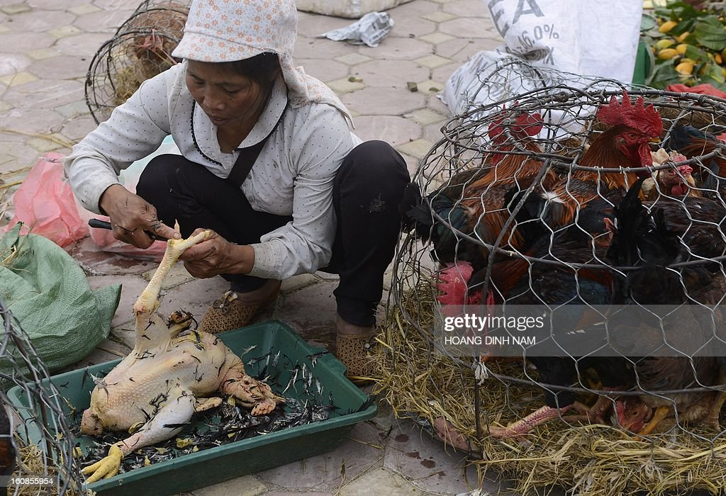 A vendor prepares a chicken for a customer as Vietnamese do last-minute shopping ahead of the Lunar New Year, known in Vietnam as 'Tet', in downtown Hanoi on February 7, 2013. Vietnamese will have a nine-day long Tet holiday this year, the longest ever decided by the Vietnamese government. AFP PHOTO / HOANG DINH Nam