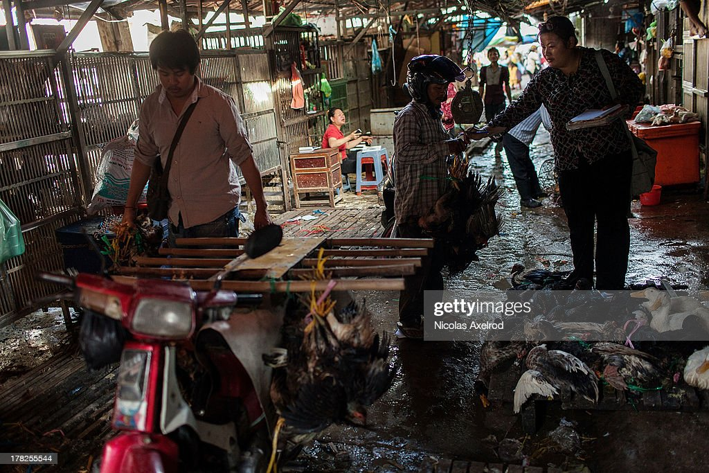 A vendor sells chickens that will be transported on a motorcycle at the Orussey Market in central Phnom Penh on August 25, 2013 in Phnom Penh, Cambodia. Cambodia has seen the worst out break of Avian influenza H5N1 since the disease was first identified, so far this year 17 cases have been report, 10 of which have been fatal.