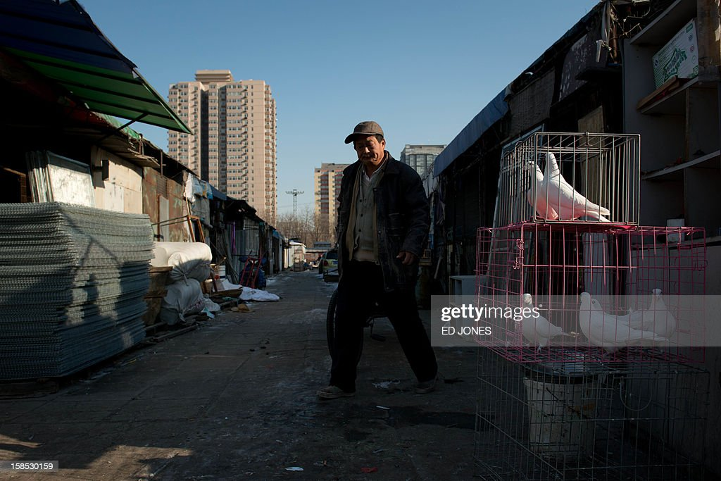 A vendor walks past doves displayed for sale at a pigeon market in Beijing on December 18, 2012. The market was once the city's largest until plans were announced to demolish the area to make way for an office development. Vendors, who pay around 0.4 Yuan (0.06 USD) per square metre, according to state media, offer a variety of pigeon-fancying paraphernalia and other animals including rabbits, dogs, and crickets. AFP PHOTO / Ed Jones